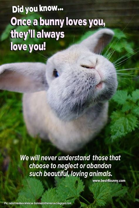 best bunny 25 best bunny quotes on qoutes
