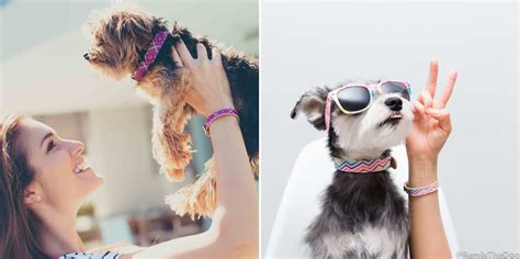 collar matching bracelet friendshipcollar matching collars and bracelets milk