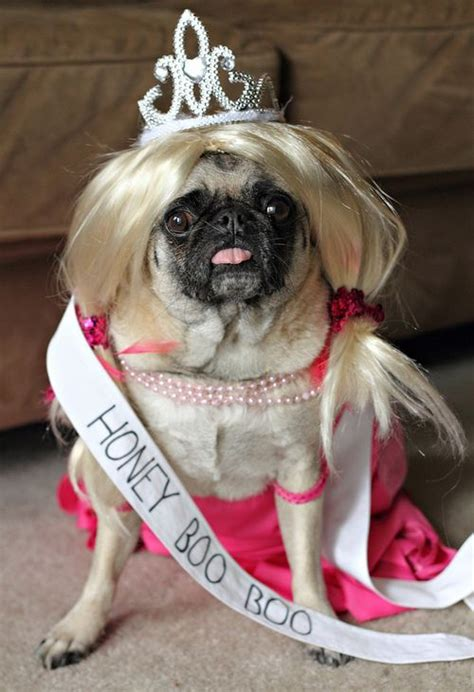 pug in costume pug costume pug wearing a honey boo boo costume my