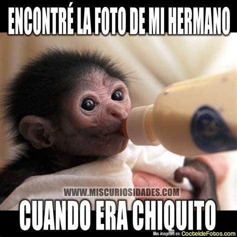 imagenes graciosas chidas imagenes chistosas chidas de risa para whatsapp animales