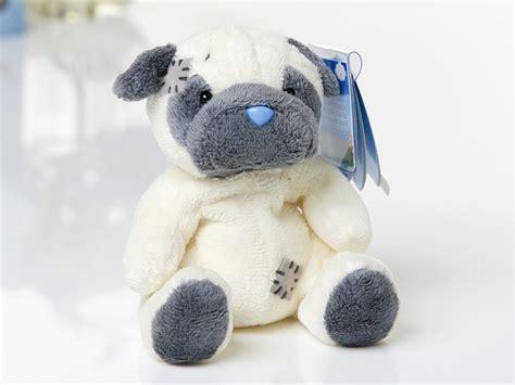 my pugs nose is my blue nose friend foo the pug threelittlebears co uk