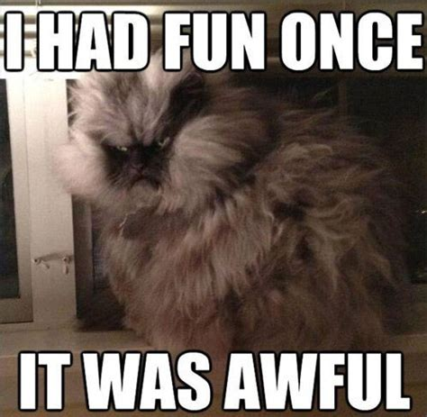 Colonel Meow Memes - colonel meow