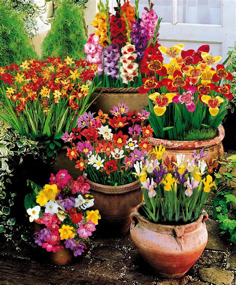 Bulbi Fioritura Estiva by Buy 100 Summer Flowering Bulbs Bakker