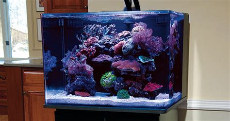 marine aquarium aquascaping aquascaping nano reef aquariums how to maximize limited