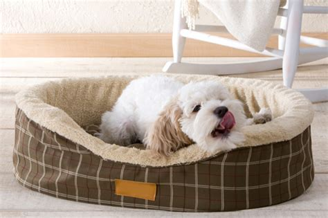how to keep dog off bed how to keep furniture in good condition with pets at home