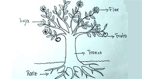 imagenes de flores y arboles ciencias naturales 2 5 c 243 mo dibujar una planta 225 rbol y