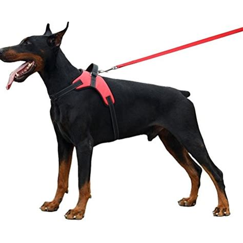 Wolf Doberman Leather Pull Up 02 compare price to doberman harness tragerlaw biz
