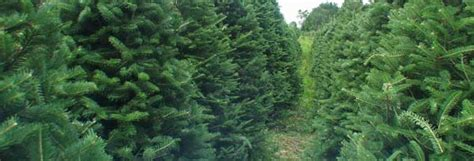 nh magazine best cut your own christmas tree tree farm new hshire best template collection