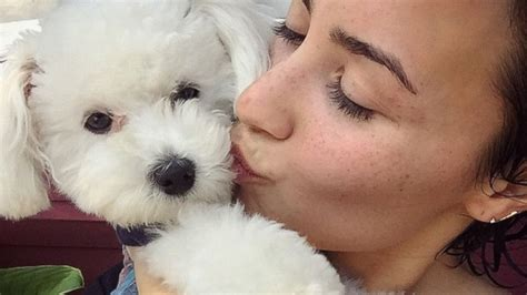 demi lovatos dogs tragic death new details about what demi lovato opens up about tragic death of her dog abc