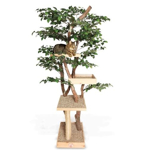 cool cat trees www imgkid com the image kid has it