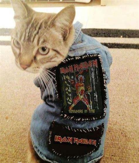 Metal Cats trending