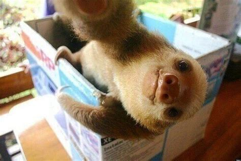 Too Cute Meme Face - sloth selfie will steal your heart photo