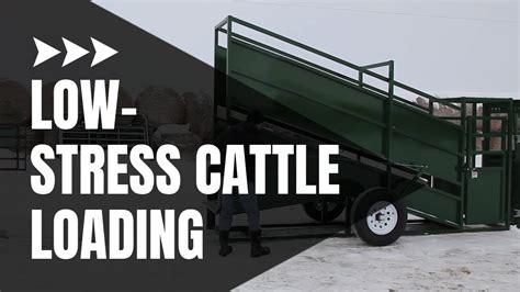 Cattle Loading Chute Cattle Equipment Arrowquip Youtube