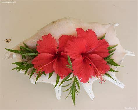 i fiori it sfondi per desktop i fiori sfondo 032