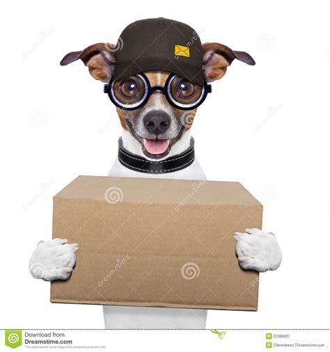 how to deliver puppies delivery post royalty free stock photography image 37086837