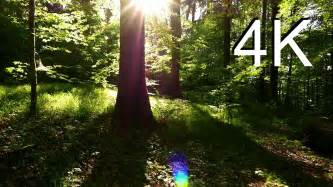 4k nature video may forest walk youtube