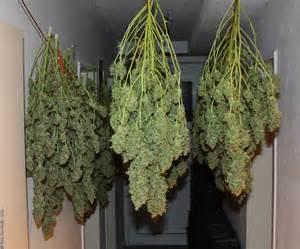 charming Cannabis Interieur #3: PowerPlant-0000.jpg