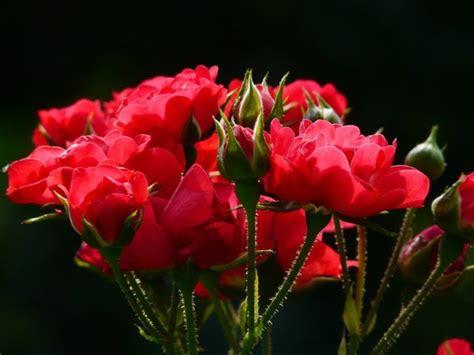 regalare un fiore ad un uomo quali fiori regalare a un uomo