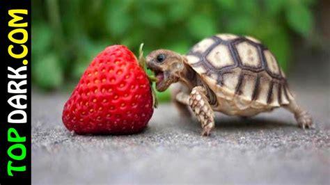 imagenes de animales pequeños 10 animales mas peque 241 os del mundo 2 2 youtube