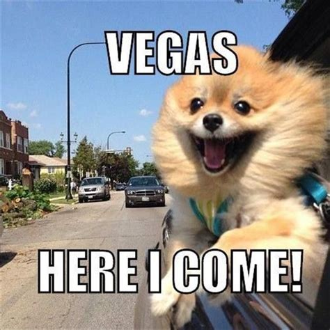 Vegas Baby Meme - 20 funny pictures captioned with animal thoughts animals