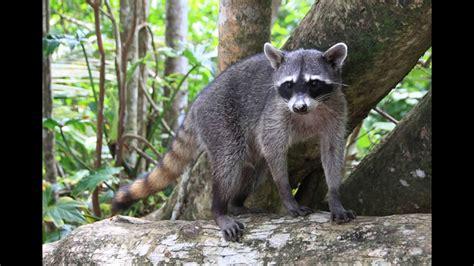 imagenes de animales de la selva garden selva h 250 meda youtube