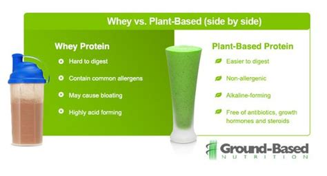 p protein vs whey whey protein vs plant based protein healthy eats