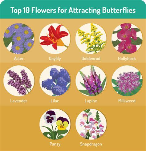 flowers for butterfly garden gardening for butterflies fix