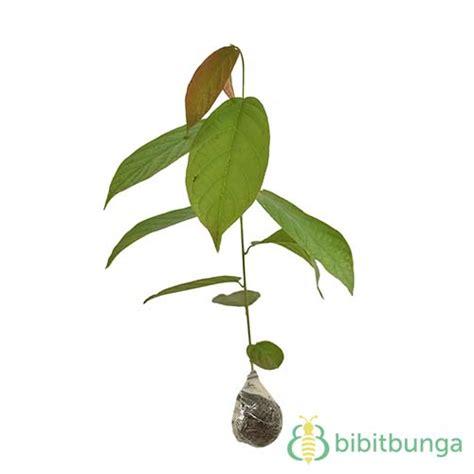 Tanaman Hias Bromelia Green tanaman bromelia green yellow bibitbunga
