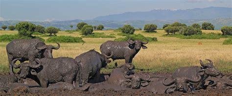 queen elizabeth national park uganda queen elizabeth national park queen elizabeth national park uganda lodges