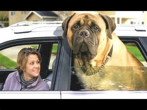 Top 10 Biggest Dogs In The World – With Funny Dog Videos ... Largest Dog In The World 2014