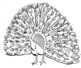 printable coloring pages gt peacock gt 72754 peacock