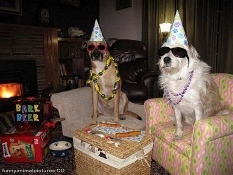 new year animal birthday pictures animal birthday pictures
