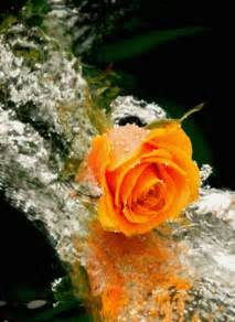 orange rose waterfall animation hd wallpapers gifs