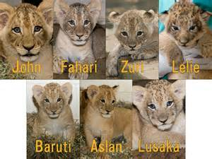 The magnificent seven receive seven names zooborns