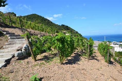 il giardino mediterraneo ischia un idea di week end ischia il napoletano