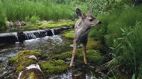 animals baby animals waterfall river moss wallpapers