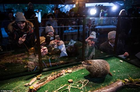 groundhog day 2015 staten island zoo groundhog day deadlock punxsutawney phil sees his shadow