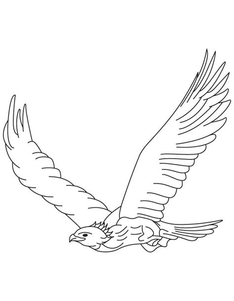 golden eagle in flight coloring page download free