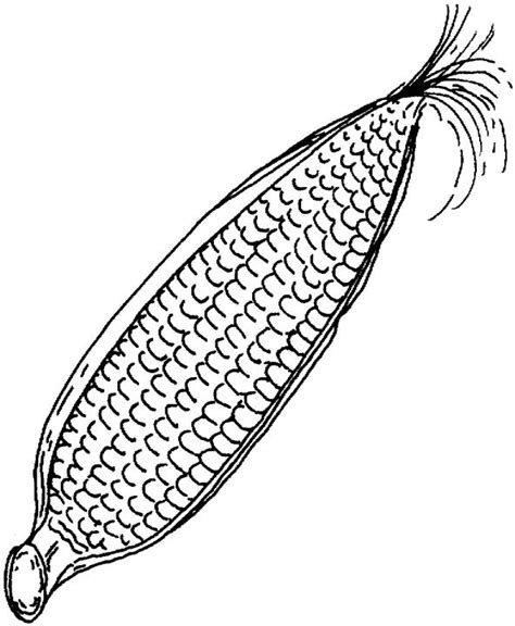 free for ear of corn coloring pages