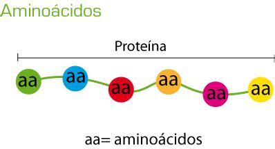 proteinas y aminoacidos instituto nacional de medicina 243 mica amino 225 cidos