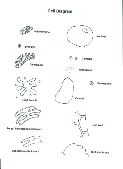human cell coloring page coloring home
