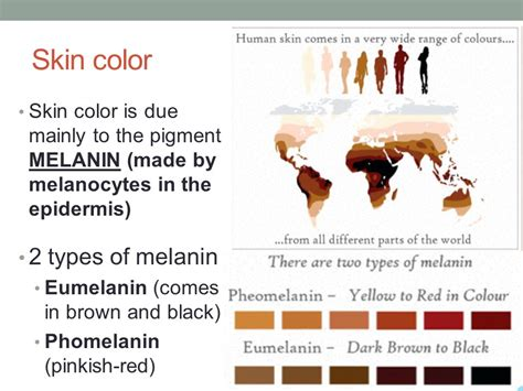 melanin skin color this is a up of you ppt