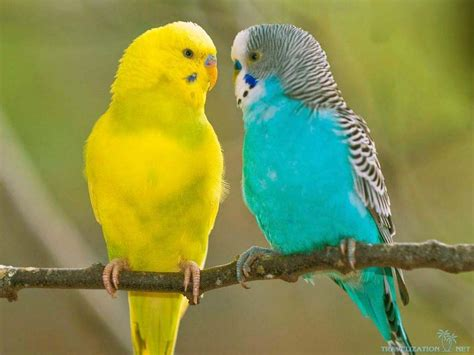 bird pair wallpapers driverlayer search engine