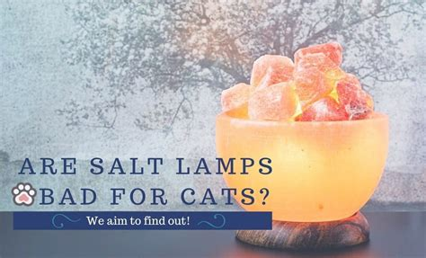 Are Salt Ls Bad For Cats We Aim To Find Out Tinpaw