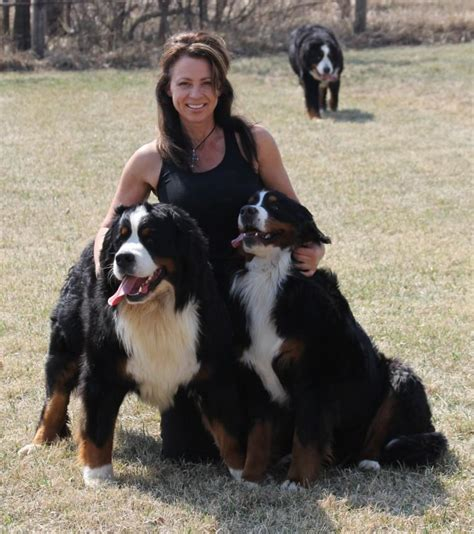 akc puppies for sale near sioux city south dakota akc marketplace akc puppies for sale near sioux city south dakota akc marketplace