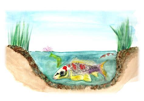 harga sketchbook watercolor image big fish small pond