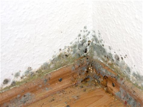 Schimmel In Zimmerecke by Schimmelpilz In Der Wohnung Eine Gefahr F 252 R Ihre Gesundheit