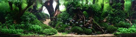 Ada Aquascaping Contest by Top 20 Iaplc 2012 Entries Ukaps Member Entries Uk