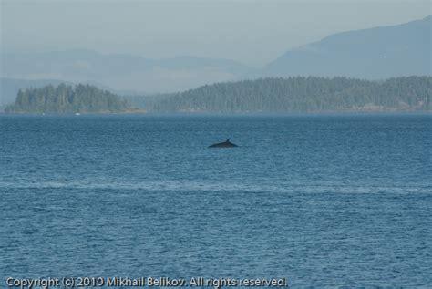 Vancouver Island Mba Quora by Mikhail Belikov Photography Writing Kayaking