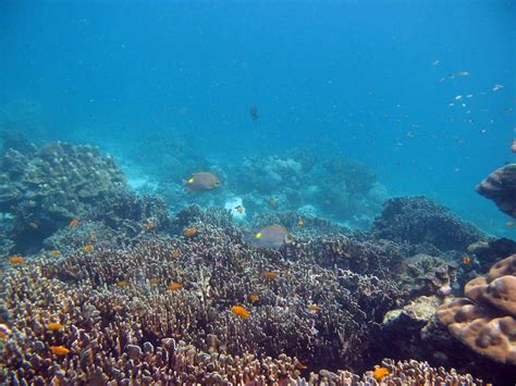 dive and relax koh lanta dive and relax koh lanta thailand cartogramme